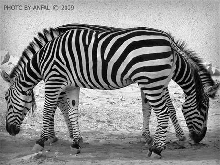 Amazing Photographs With Optical Illusions