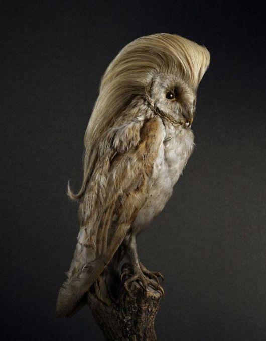 Hilarious Bird Hairdos For Shampoo Commercial