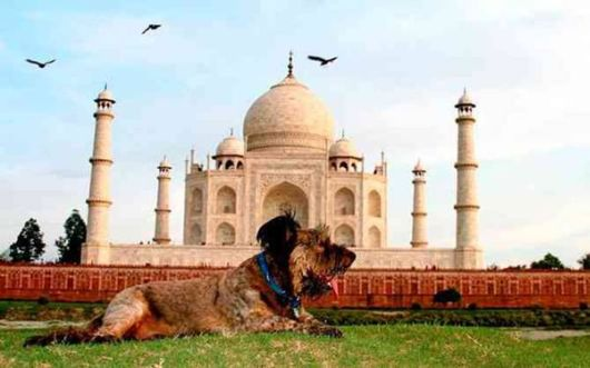 A Dog Who Travelled The World