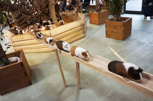 The Guinea Pig Road In Japan During Rush Hour