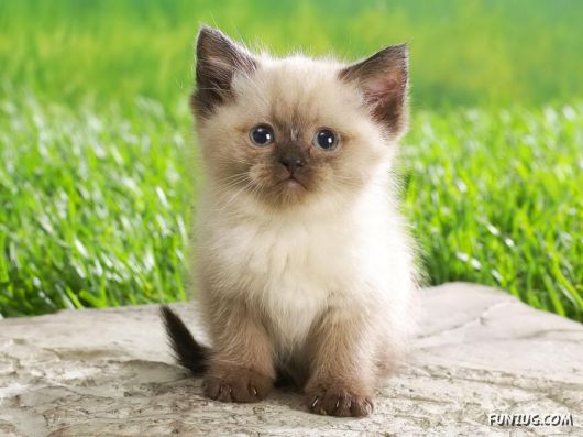 Click to Enlarge - Cutest Cats Wallpapers