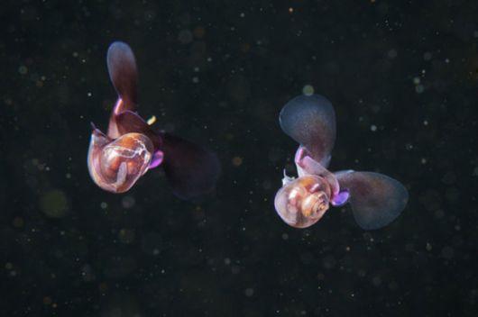 Beautiful Alien Like Sea Creatures