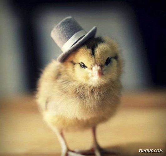 Cool Chicks In Fashionable Caps